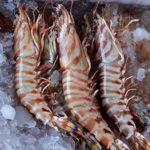 Гигантские креветки. Giant prawns.